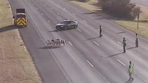 Herd Of Goats Hijack Highway