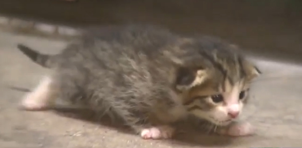Adorable kitten saved in nick of time