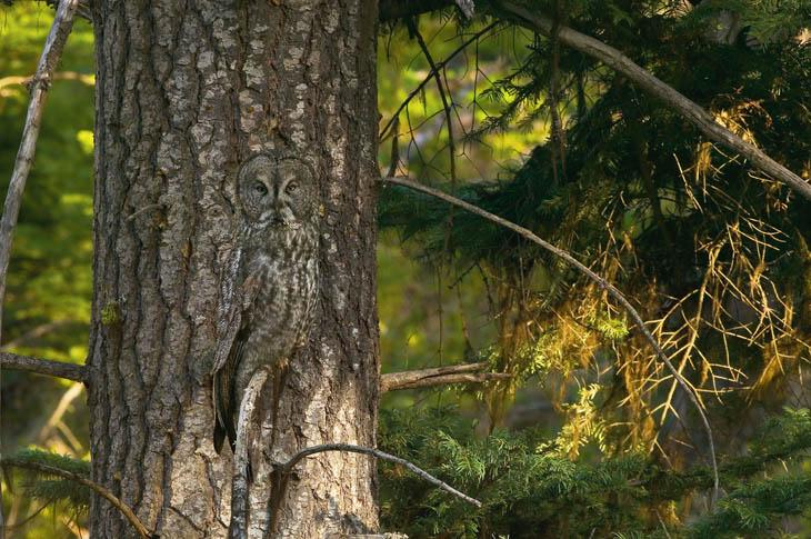 10 camouflaged animals hidden in plain sight