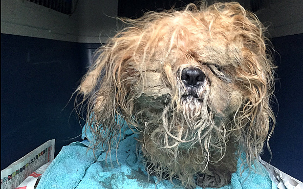 Abandoned puppy rescued on Christmas Eve doesn't look like this anymore