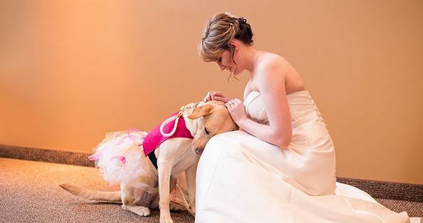 Service dog steals the show at wedding