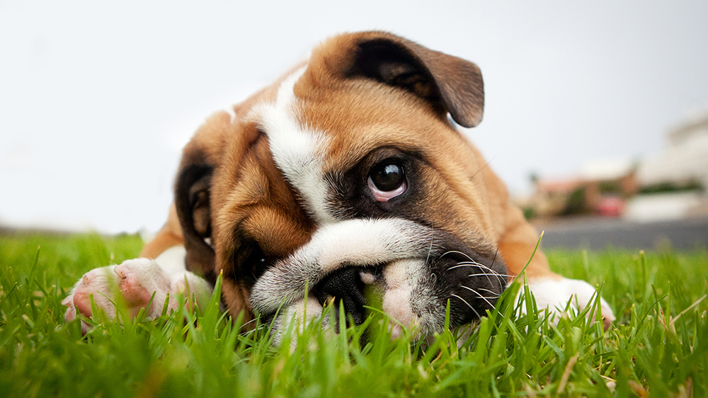 Five feel-good ways to find a new pet