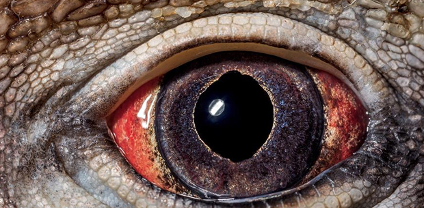10 captivating photos observing different animal's eyes in extreme close up