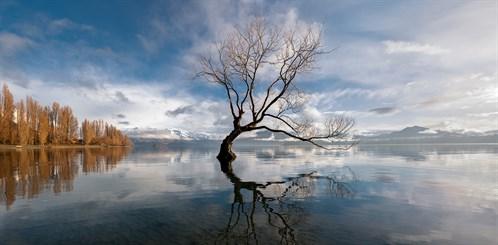wanaka tree (3)
