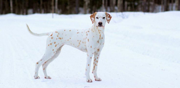 15 pets with beautifully unique coat markings