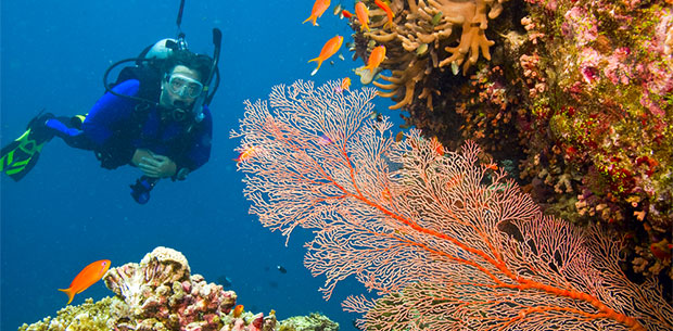 Coral expert debunks Great Barrier Reef myths