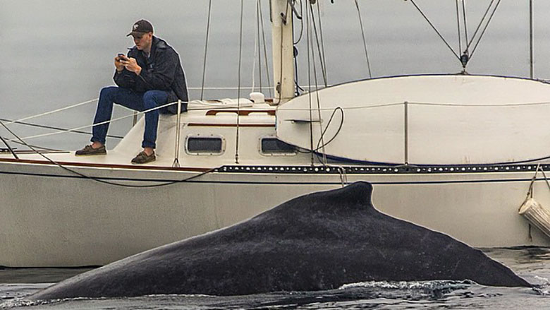 Man misses whale right next to him because of phone