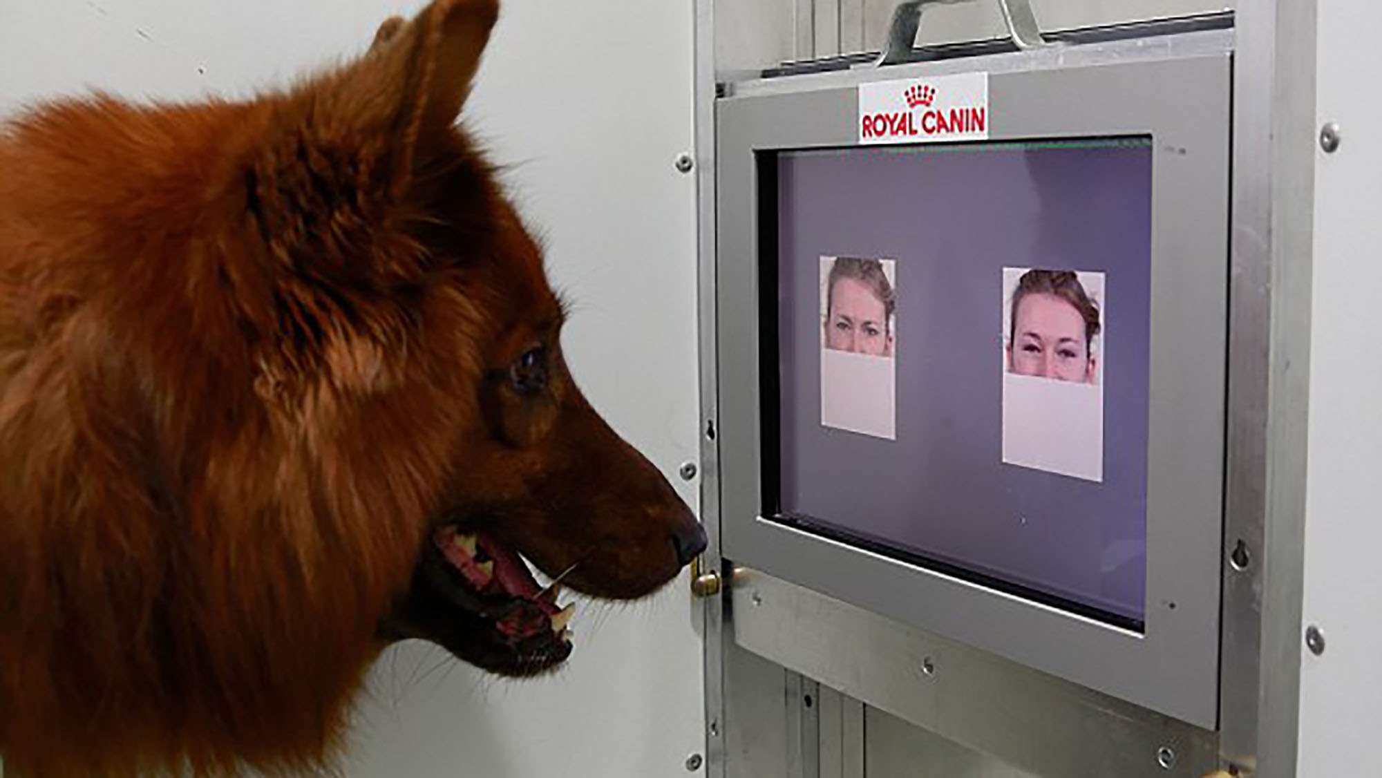 Dogs can tell how you're feeling, according to new study