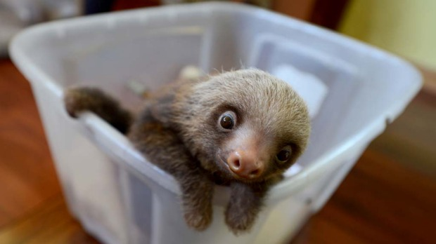 Is this the world's cutest animal?