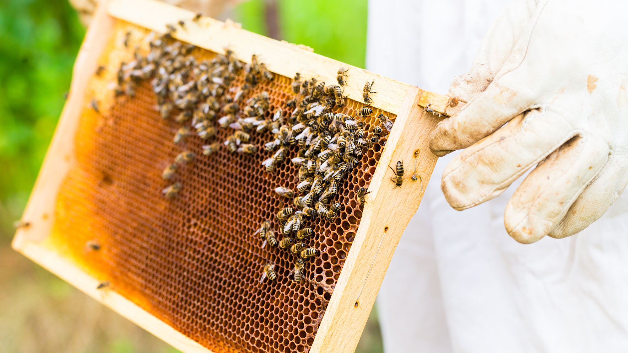 One, then some: How to count like a bee