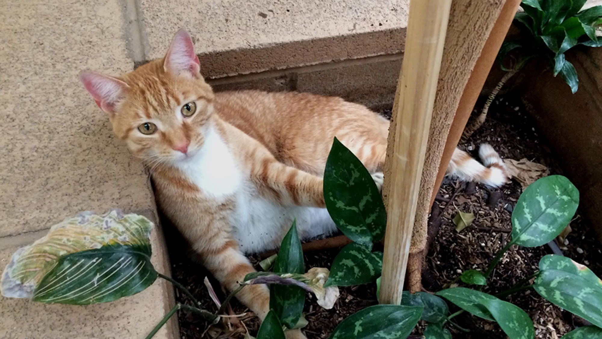 After missing for 2 years, cat turns up 3,000km away