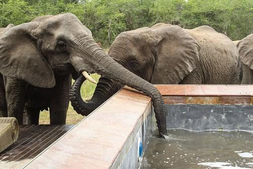 Elephant Pool2