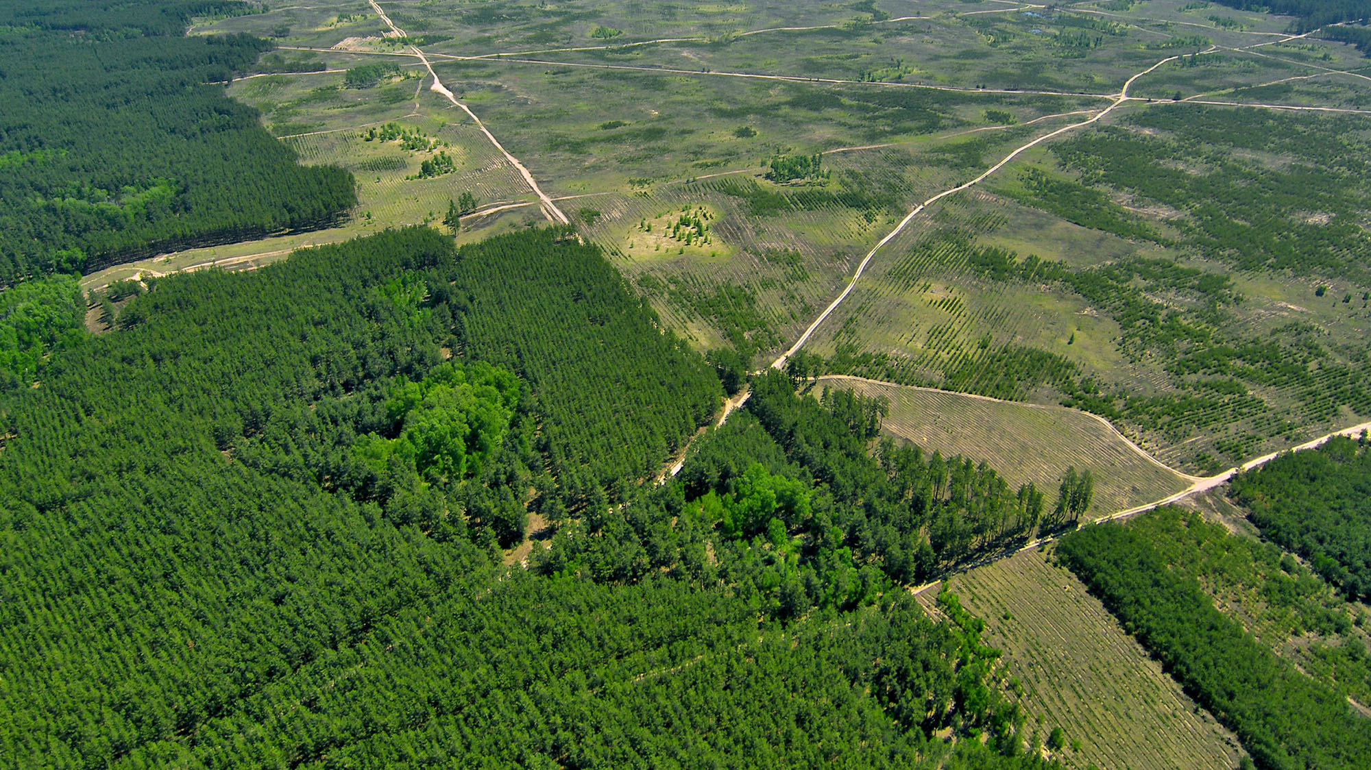 Despite deforestation, Earth has become greener