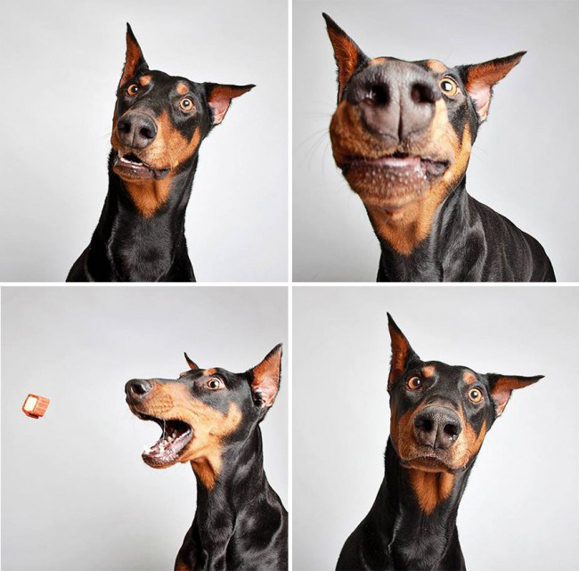 Why did this animal shelter set up a photobooth for its dogs?