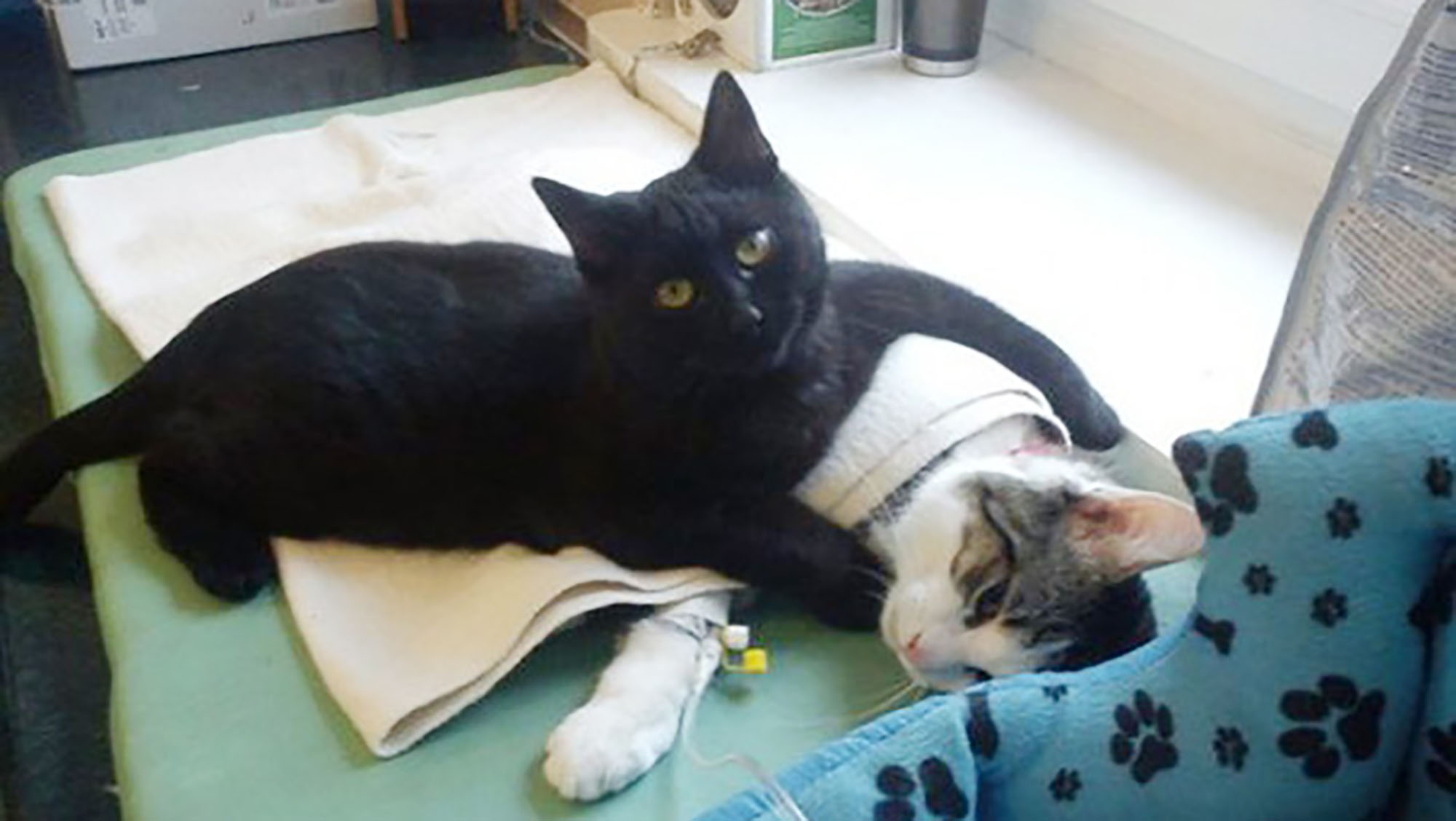 Cat takes on role of nurse and looks after animals at shelter