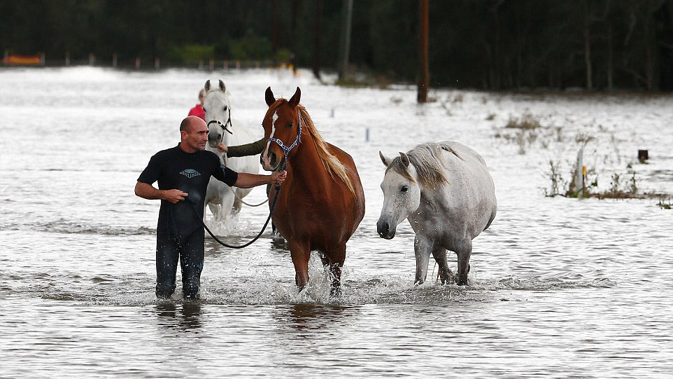 Man uses surfboard to rescue 5 horses in NSW storm