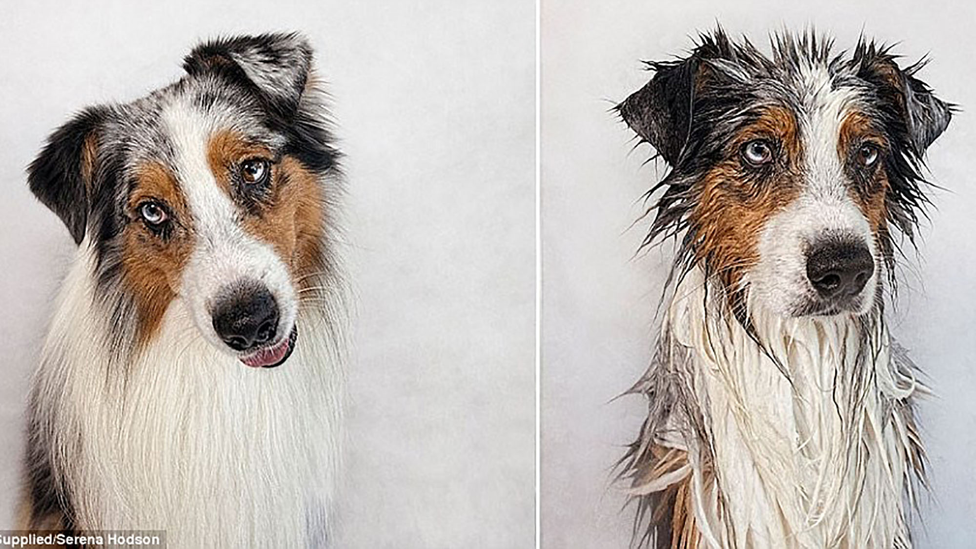 You'll love these hilarious pictures of dogs before and after their baths