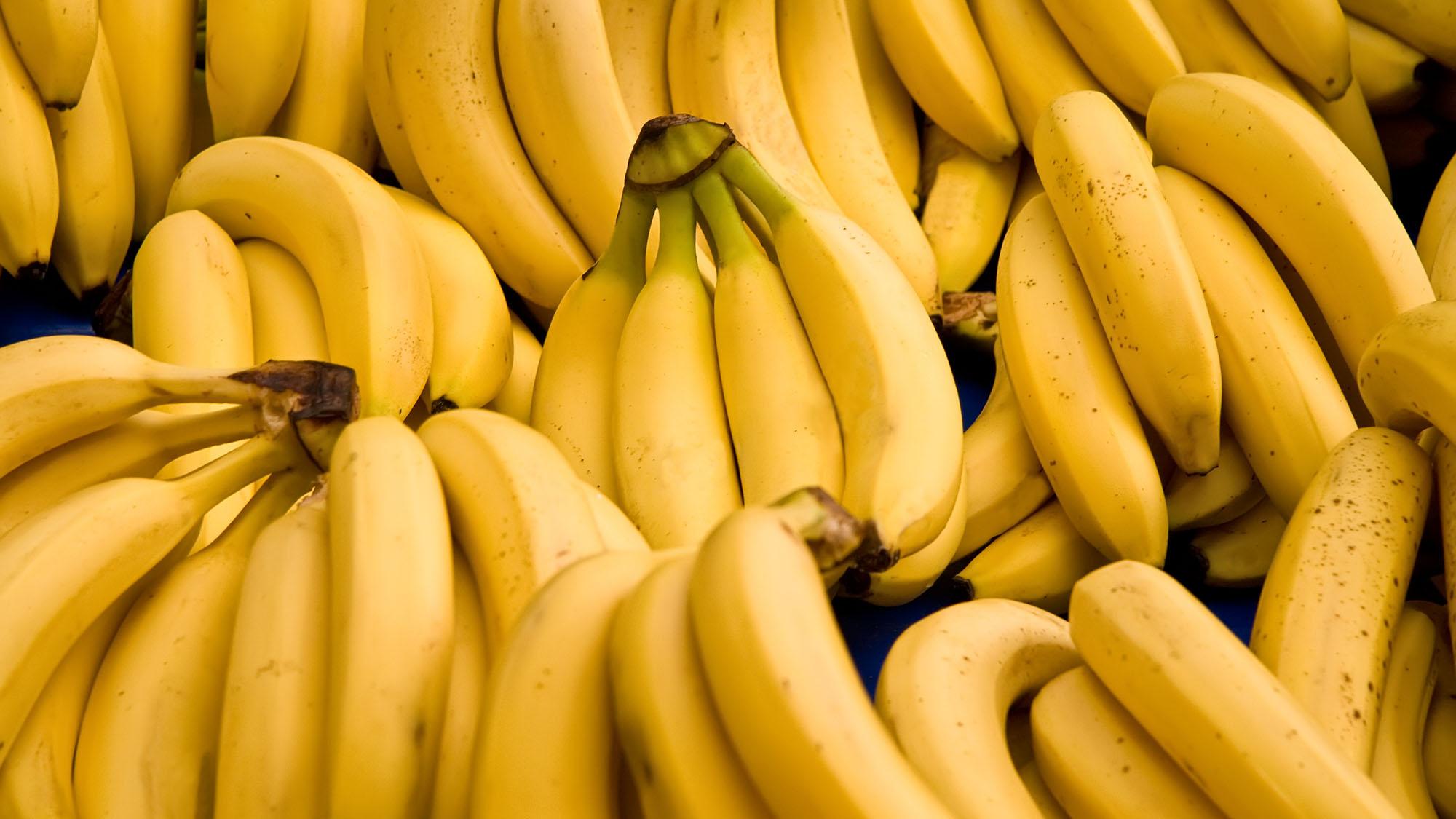 Bananas in danger of going extinct
