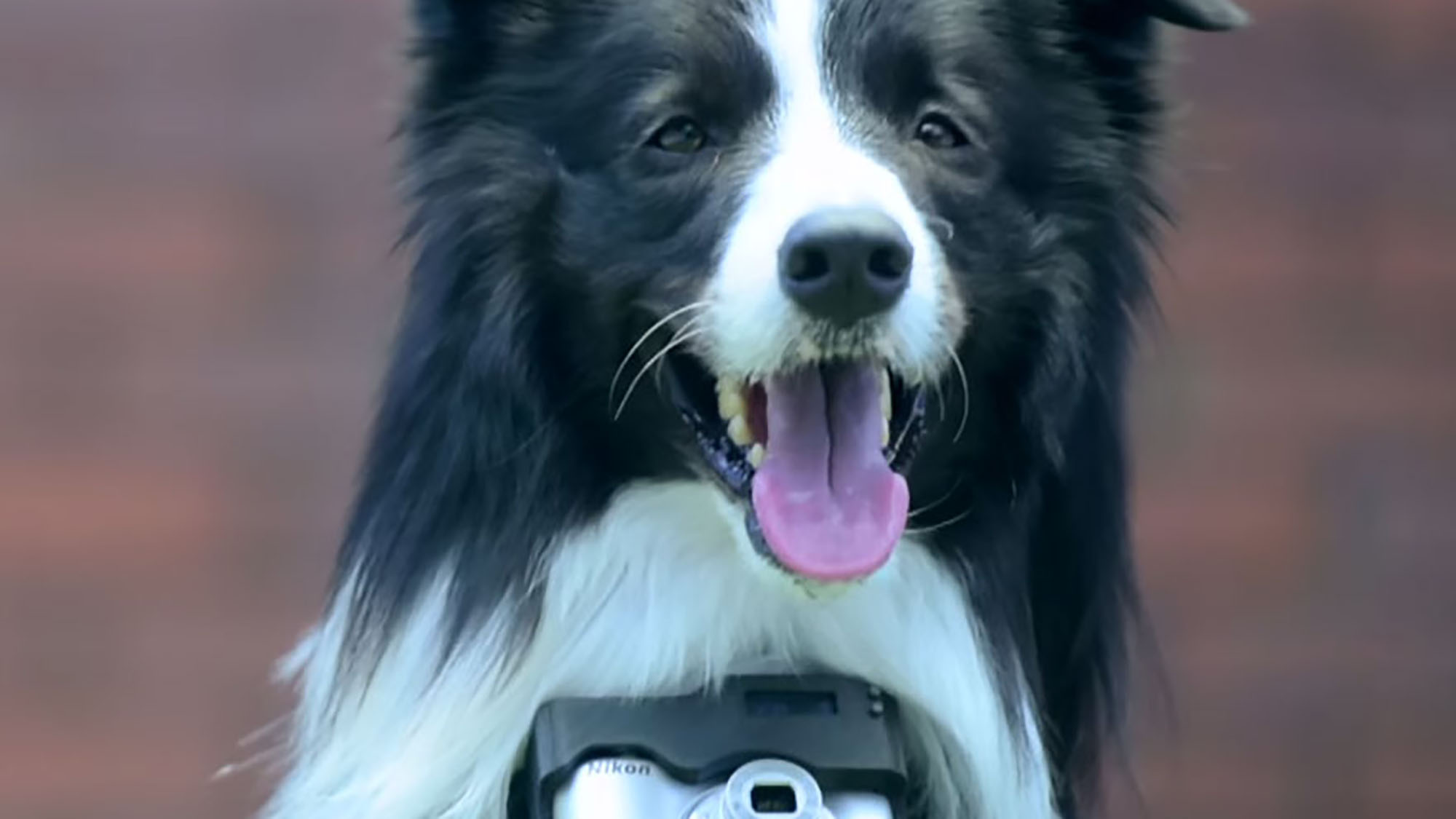 Dogs can now take photos thanks to Nikon's new contraption