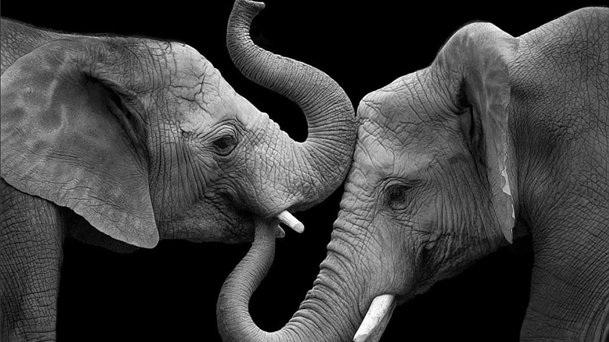 Amazing photos capture the intense emotions elephants experience