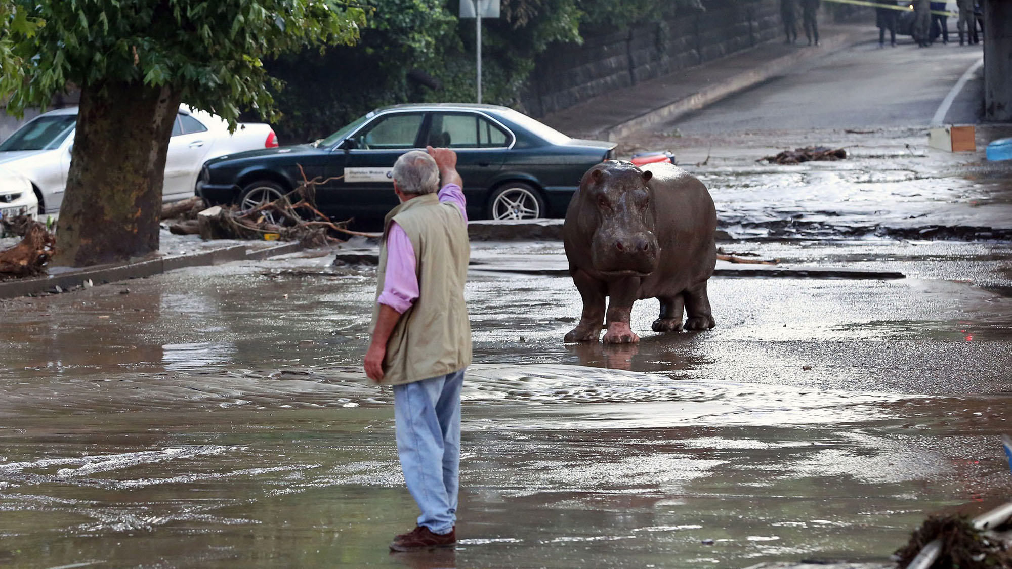 Zoo animals on the loose in Georgia after terrible flooding