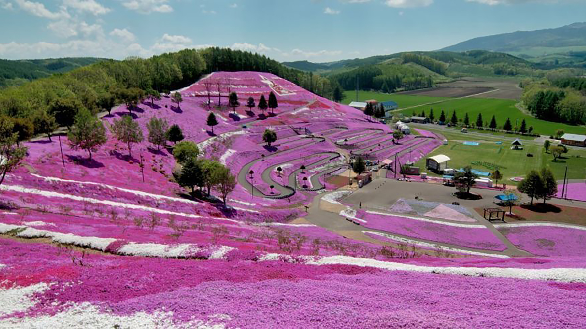 In pictures: Japan's spectacular flower fields