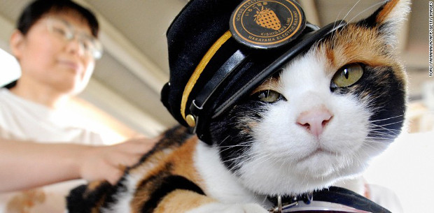 Japanese stationmaster cat mourned by thousands
