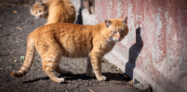 LA's stray cats are becoming the solution to the city's rat problems