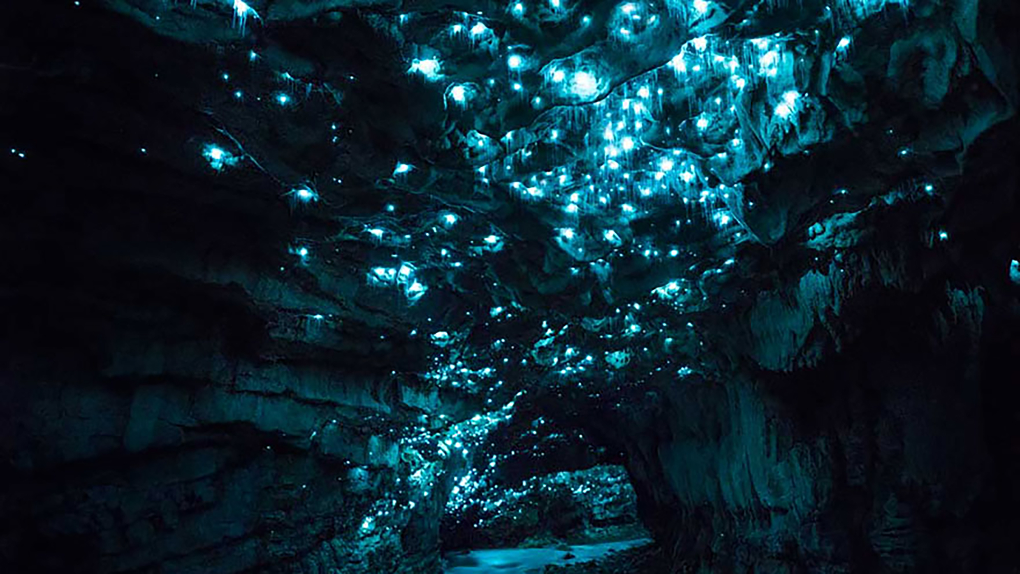 In picture: brilliant glowworms in New Zealand caves