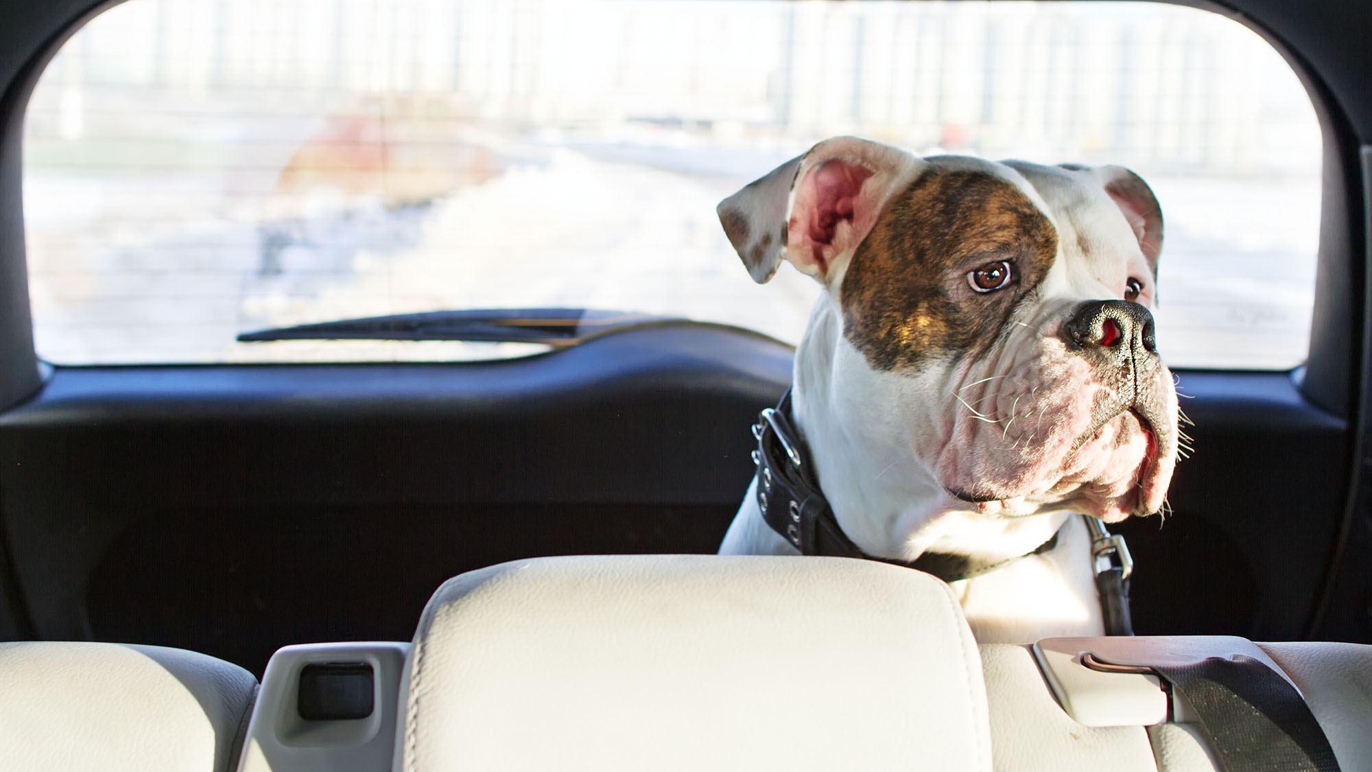 New US law makes it legal for people to break into cars to rescue trapped animals