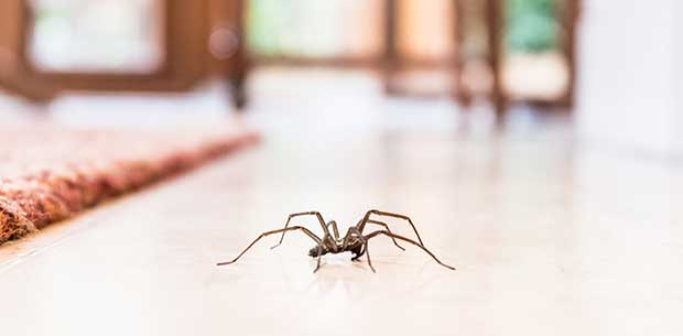 Simple trick to banish spiders from your home