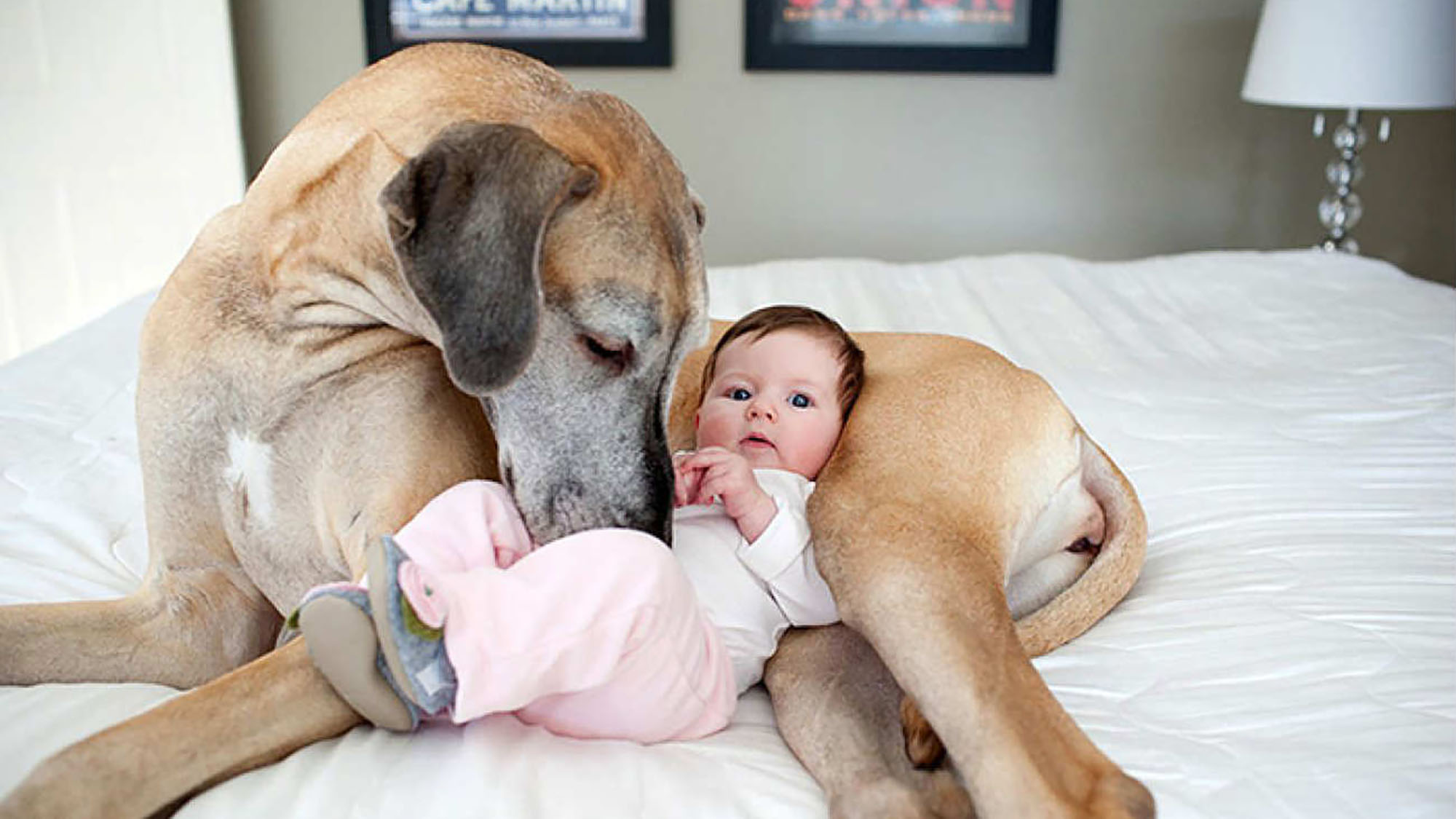 10 adorable baby and dog friendships