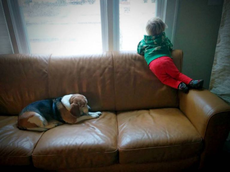 """3-year-old boy receives letter from beagle in """"doggie heaven"""" thanks to kind postman"""