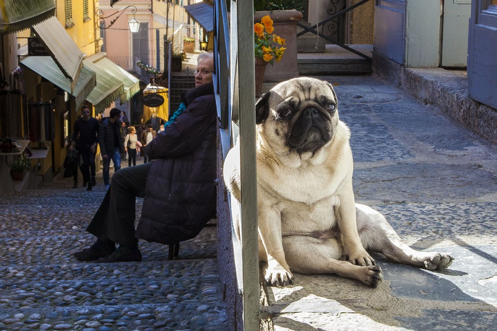 Perfectly timed photos make these dogs look like giants