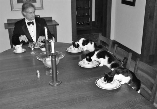 Man -fancy -dinner -with -cats -wife -vacation -1