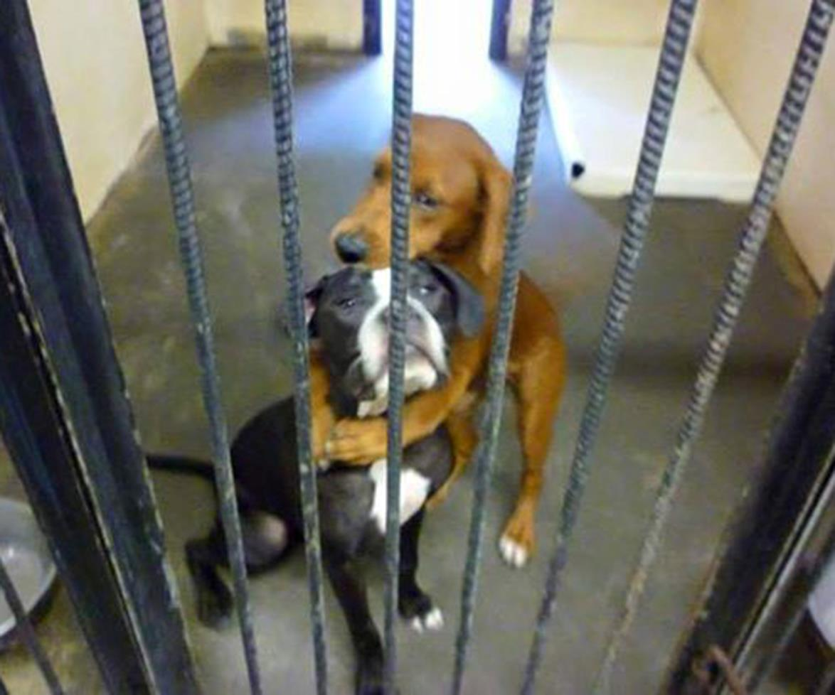 This picture of shelter dogs hugging saved them from death