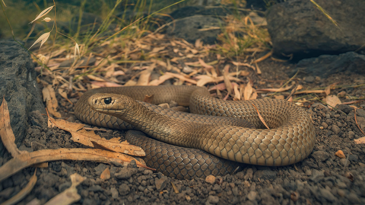 What to do if you see a snake – and how to avoid them
