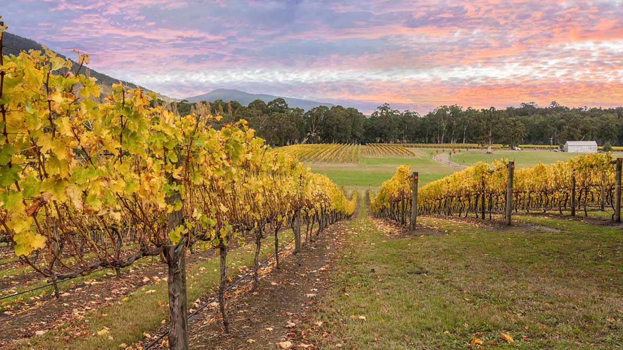 Why you need to visit the Yarra Valley