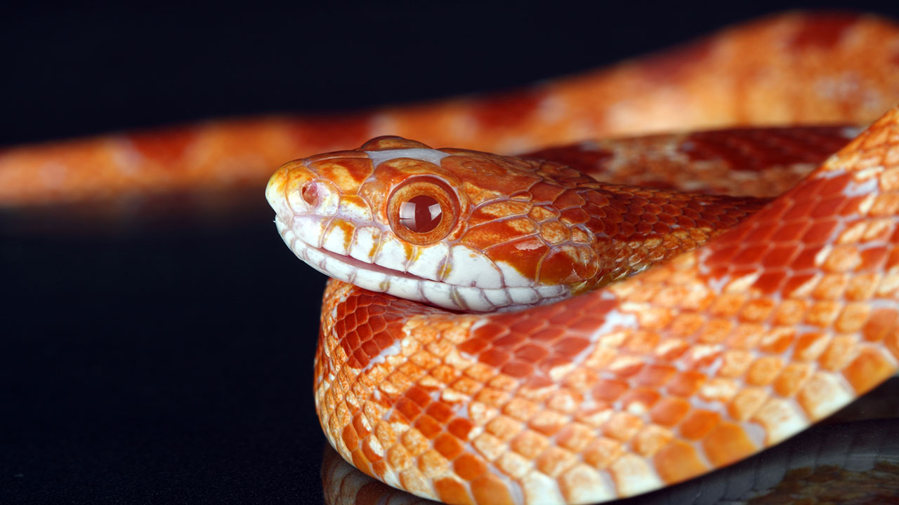 Man finds snake alive in brand new kitchen appliance