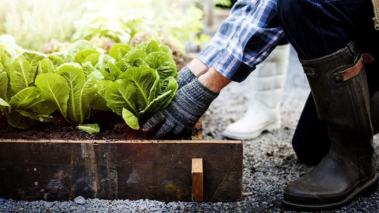 7 common backyard problems solved