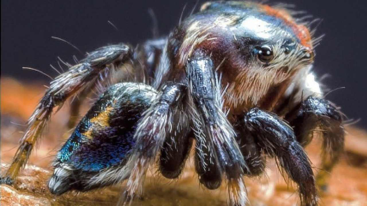 Don't like spiders? Here are 5 reasons to change your mind