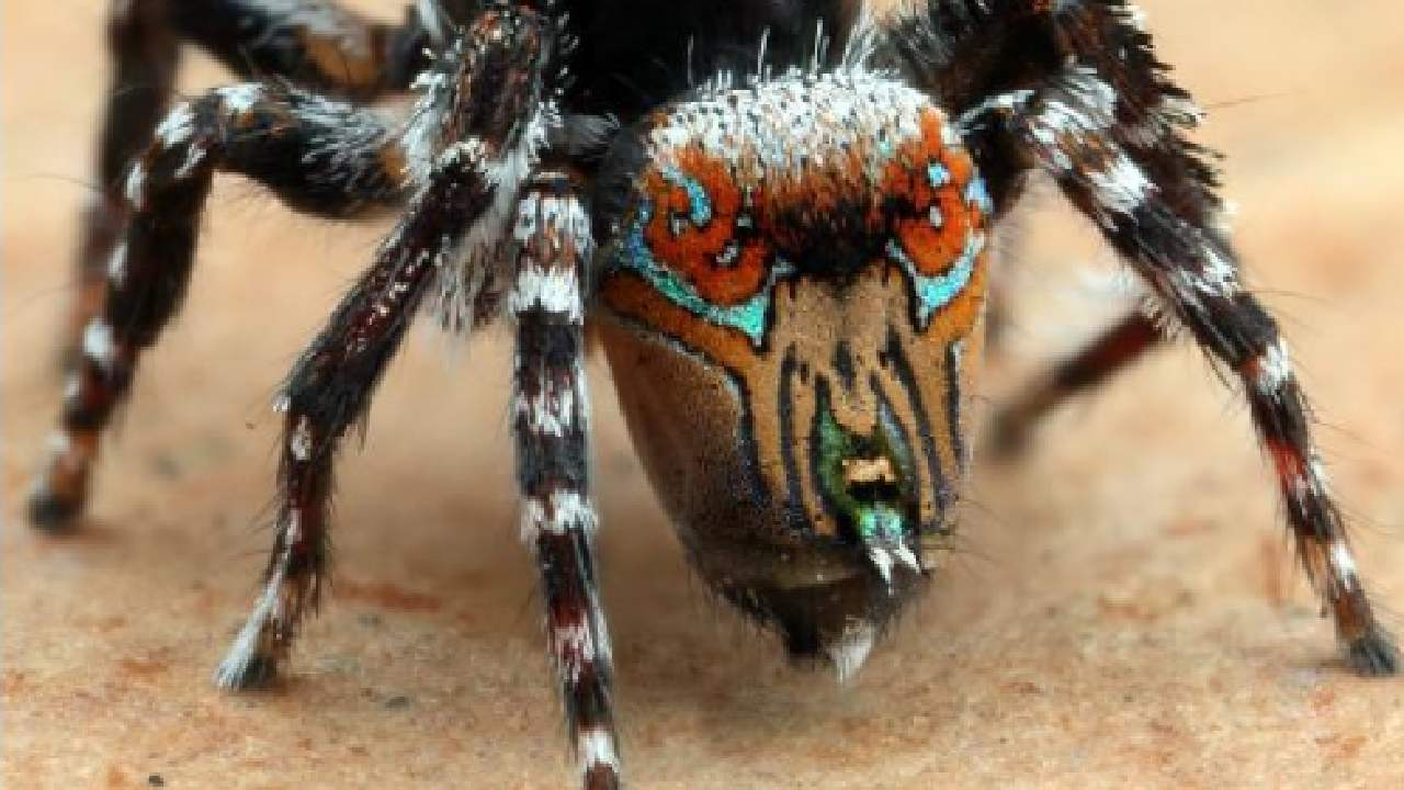 Brace yourselves: 3 new species of Aussie spiders have just been discovered