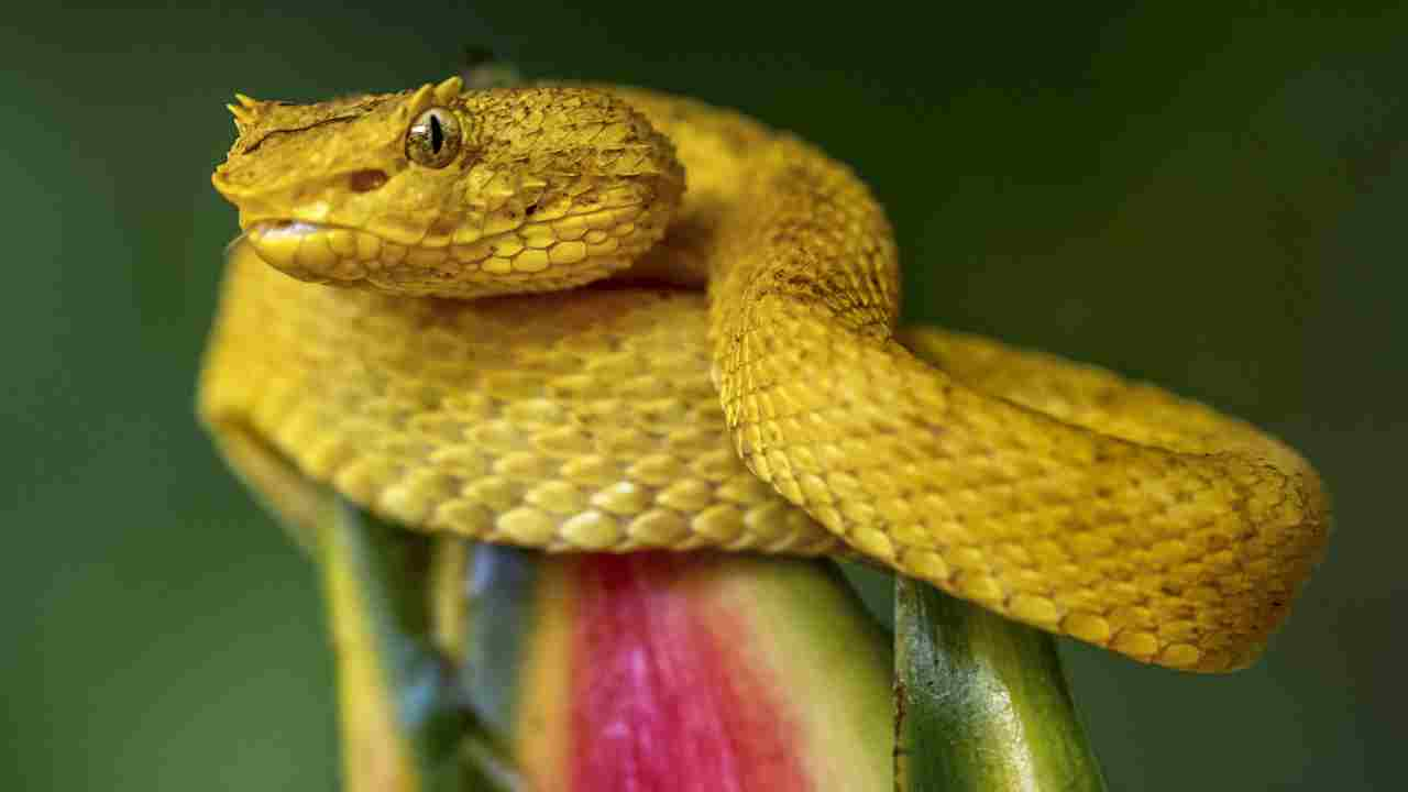 Snake Island: The real-life destination straight out of your nightmares