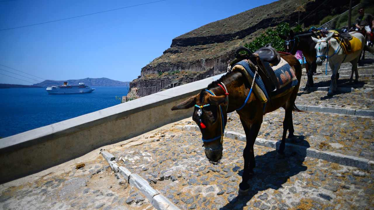 Why you should think twice before riding a donkey in Santorini