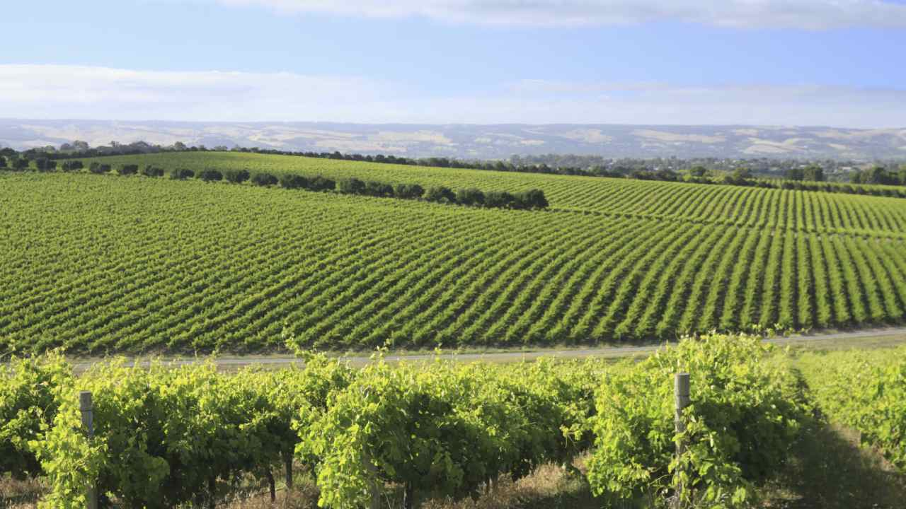 Why you should visit McLaren Vale in South Australia