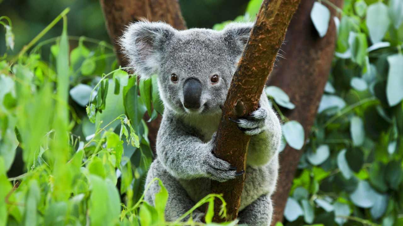 "Australia's animal extinction crisis ""inevitable"" under current conservation laws"