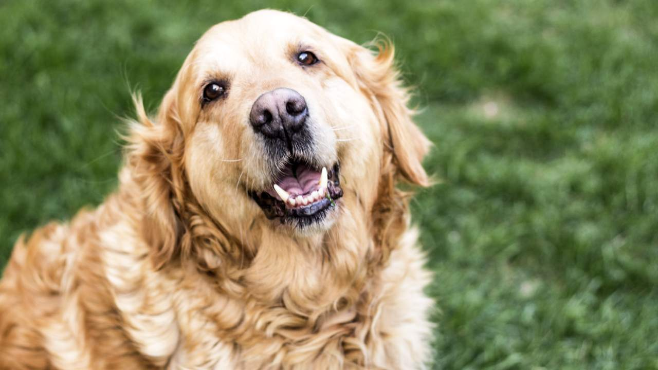 How you can help your pet age gracefully