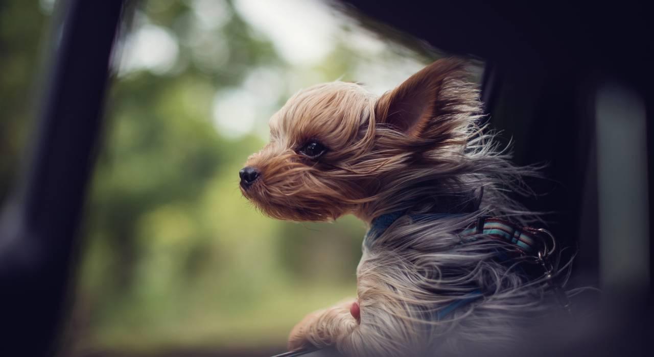 Is it true dogs don't like totravel?