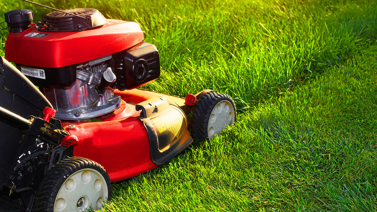 Quick tips to revive your lawn