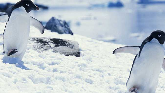 Answers to your 10 biggest questions about Antarctica